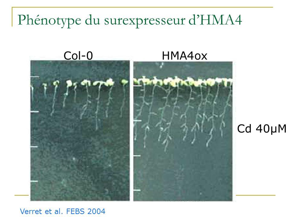 Phénotype du surexpresseur d'HMA4