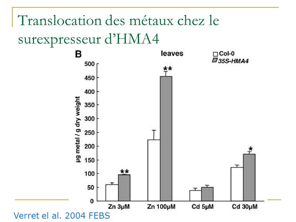 Translocation des métaux chez le surexpresseur d'HMA4