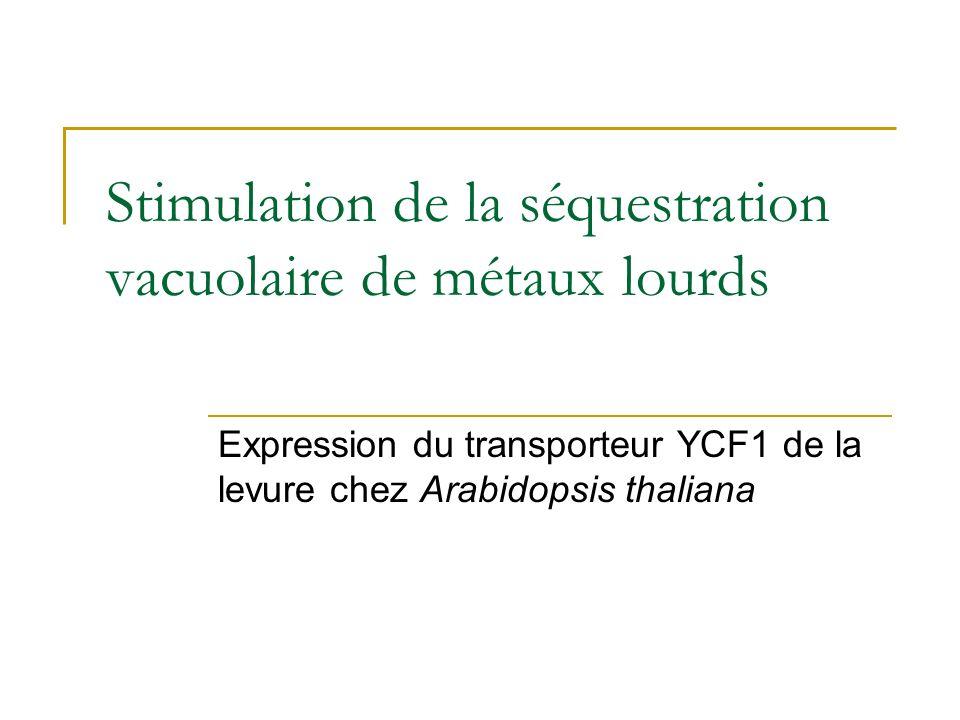 Stimulation de la séquestration vacuolaire de métaux lourds