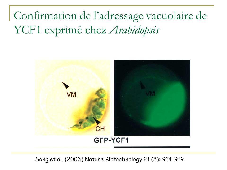 Confirmation de l'adressage vacuolaire de YCF1 exprimé chez Arabidopsis