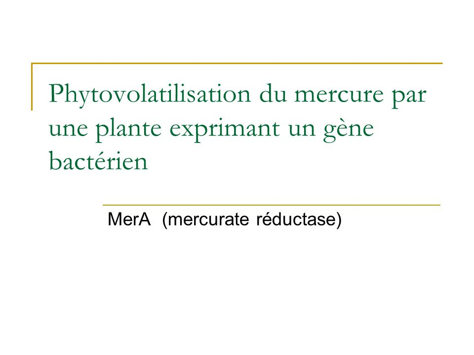 MerA (mercurate réductase)