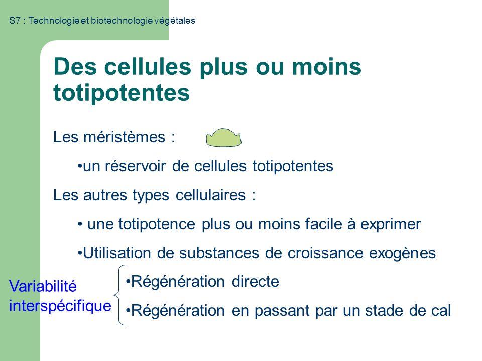 Des cellules plus ou moins totipotentes