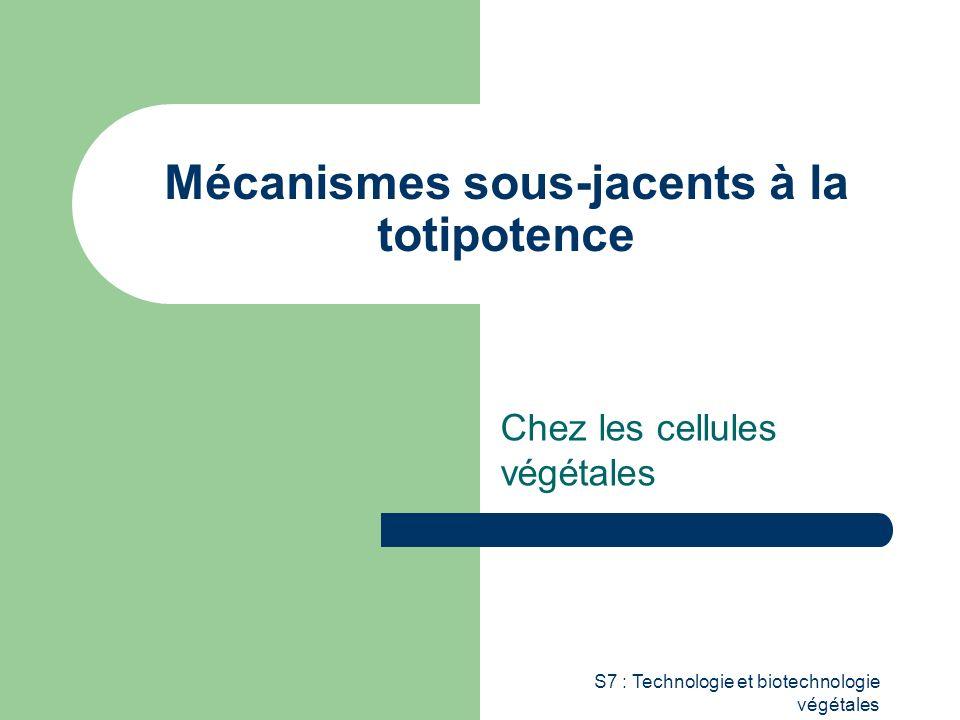 cellules totipotentes définition