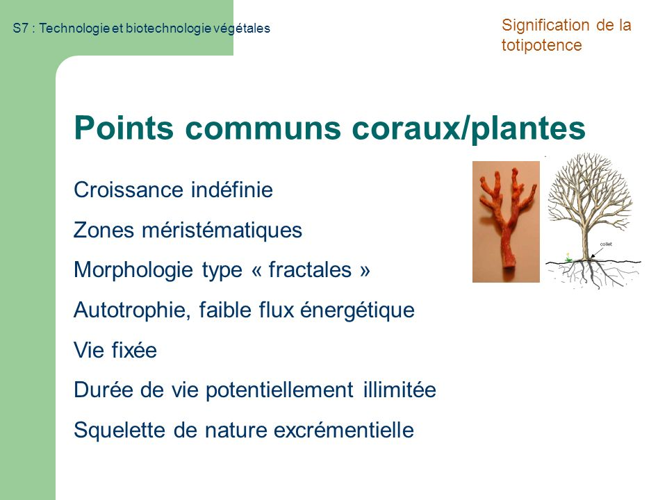Points communs coraux/plantes