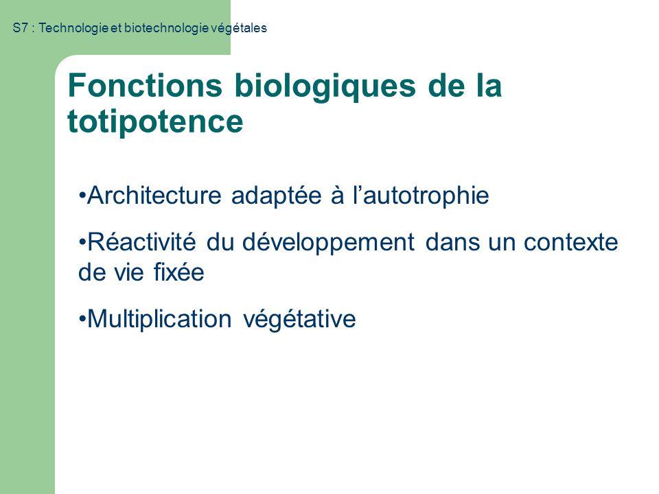 Fonctions biologiques de la totipotence