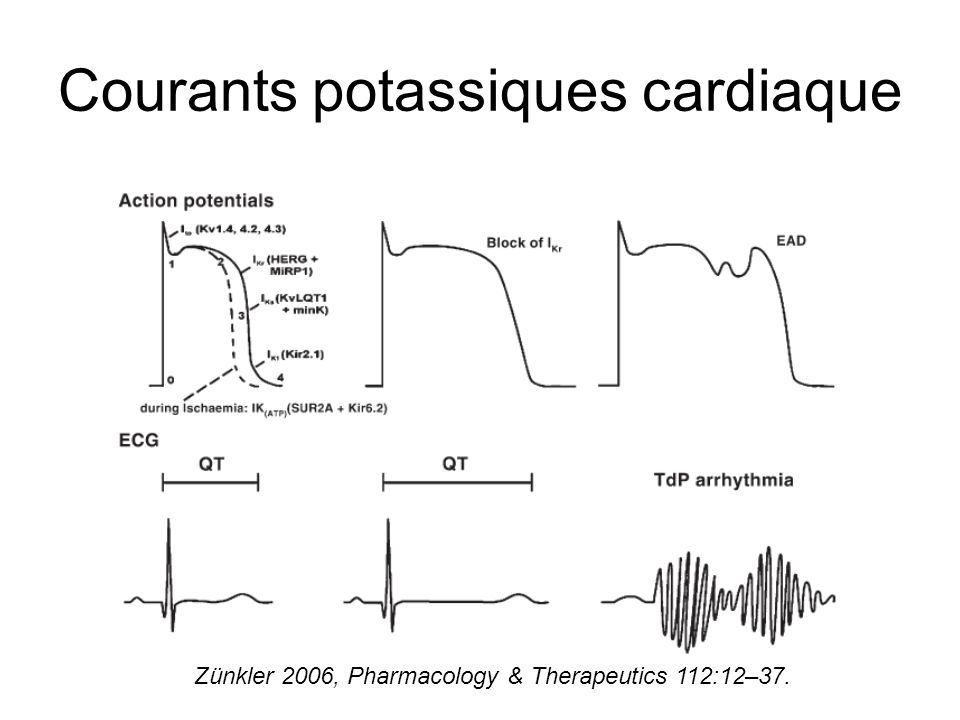 Courants potassiques cardiaque