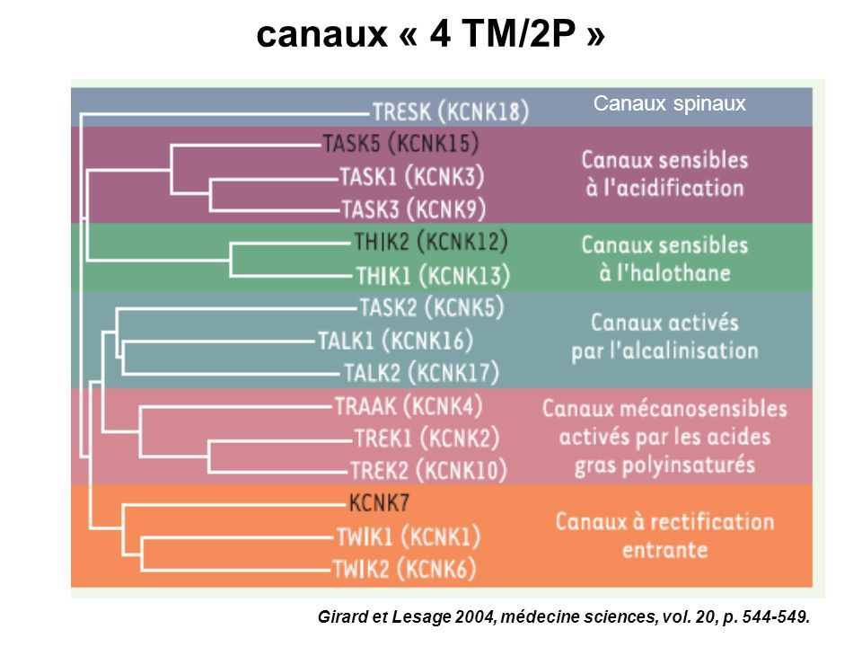 canaux « 4 TM/2P » Canaux spinaux