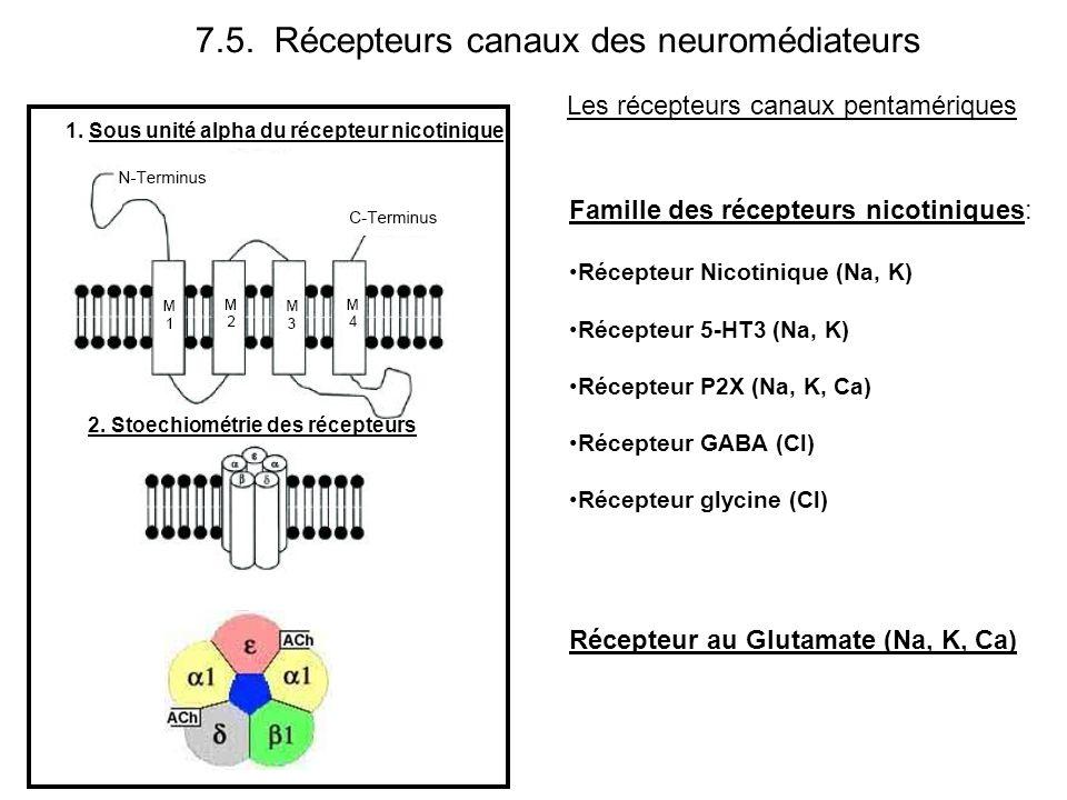 7.5. Récepteurs canaux des neuromédiateurs