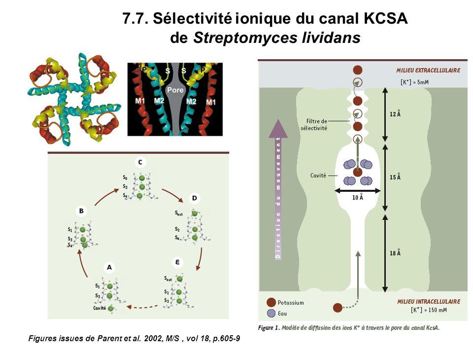 7.7. Sélectivité ionique du canal KCSA de Streptomyces lividans