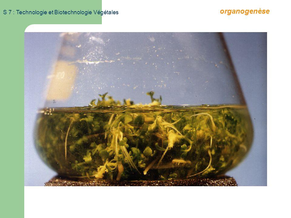 organogenèse S 7 : Technologie et Biotechnologie Végétales