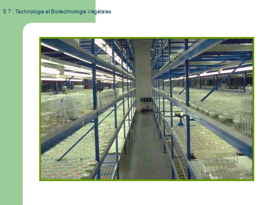 S 7 : Technologie et Biotechnologie Végétales