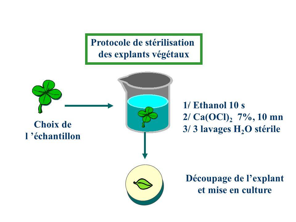 Protocole de stérilisation