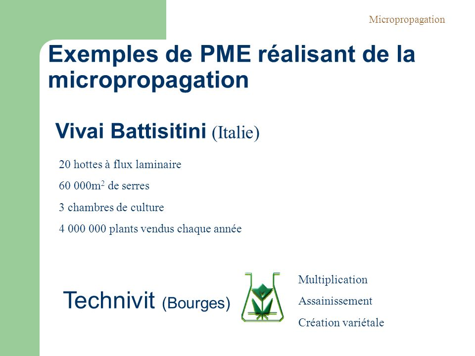 Exemples de PME réalisant de la micropropagation