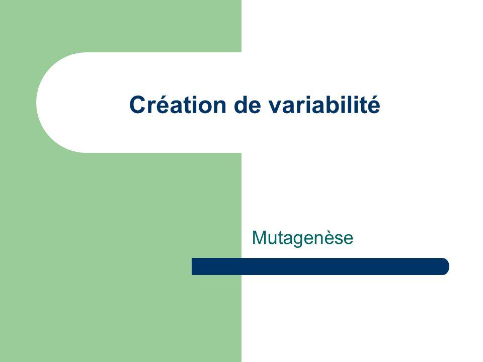 Création de variabilité