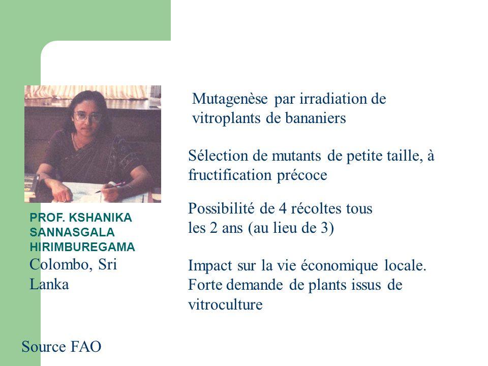 Mutagenèse par irradiation de vitroplants de bananiers