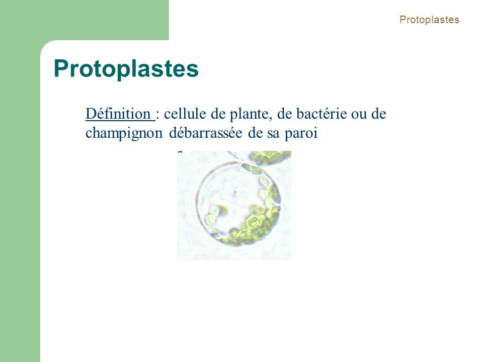 Protoplastes Protoplastes.