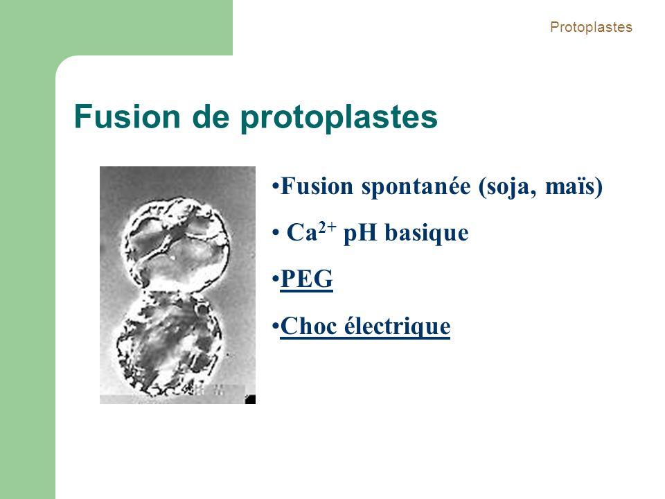Fusion de protoplastes
