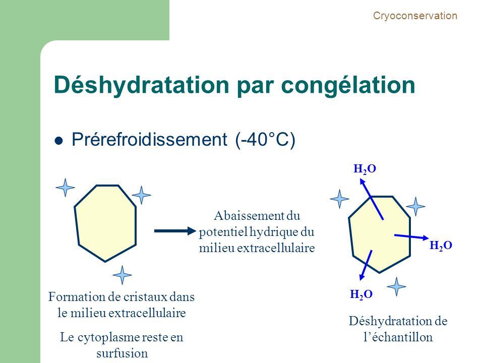 Déshydratation par congélation