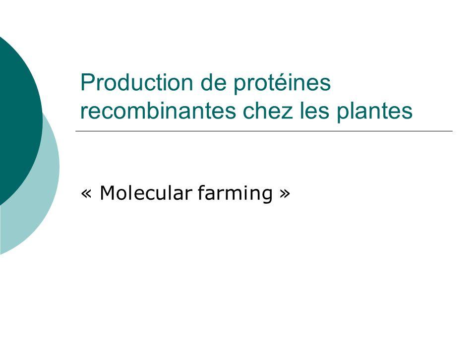 Production de protéines recombinantes chez les plantes