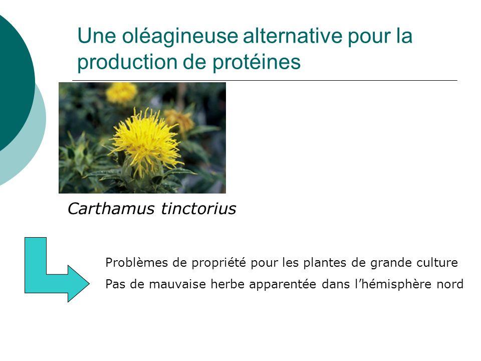 Une oléagineuse alternative pour la production de protéines