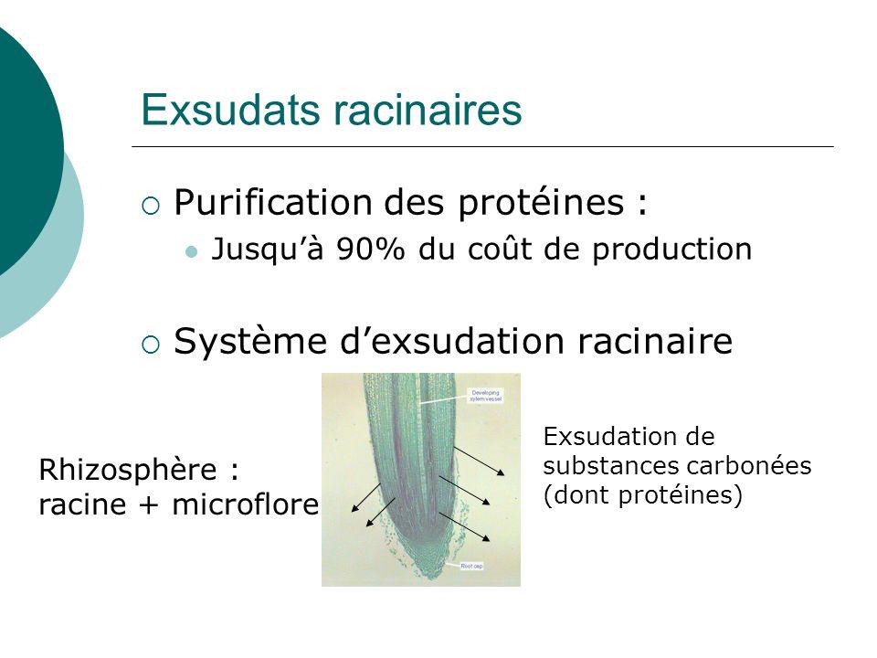 Exsudats racinaires Purification des protéines :