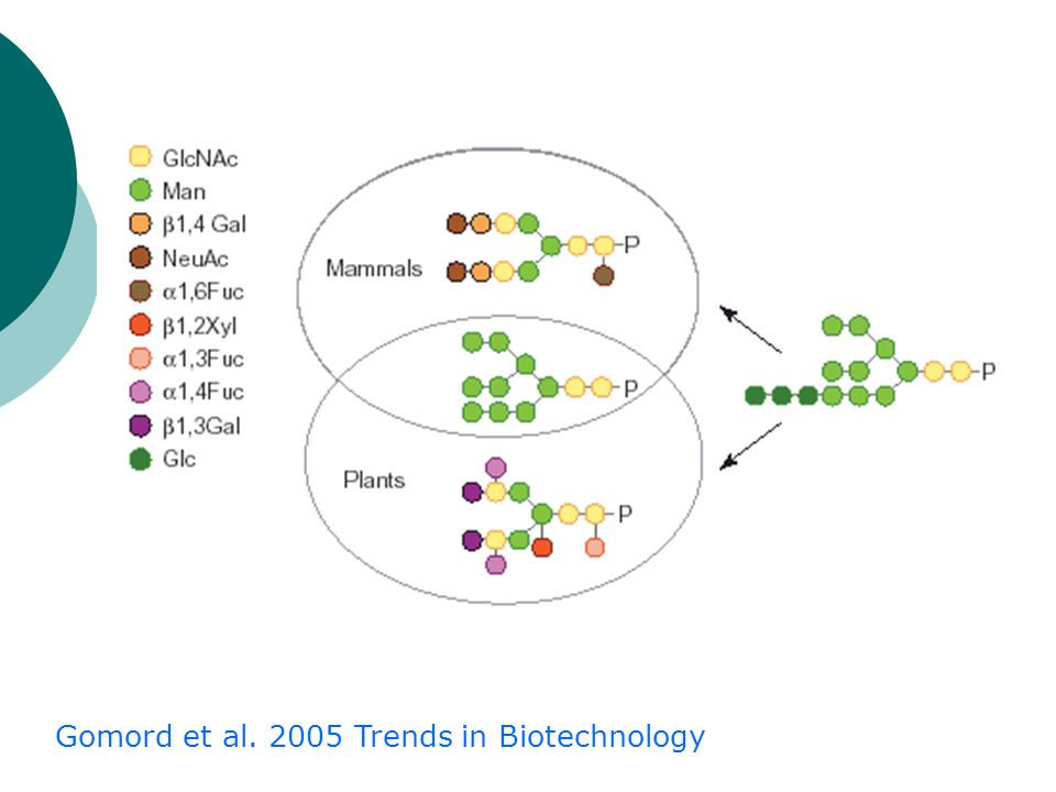 Gomord et al. 2005 Trends in Biotechnology