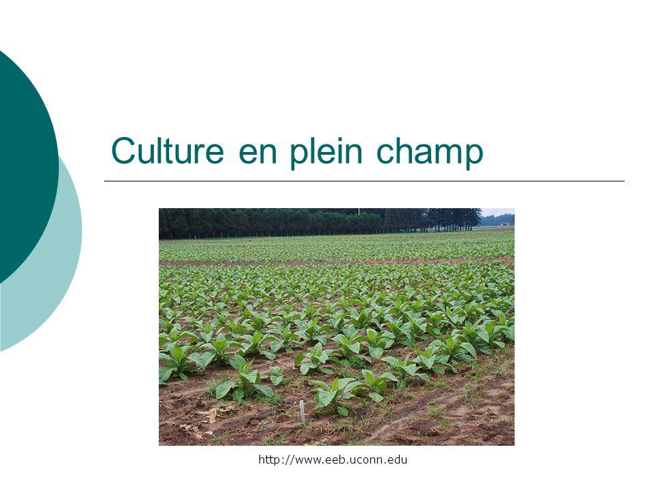 Culture en plein champ http://www.eeb.uconn.edu