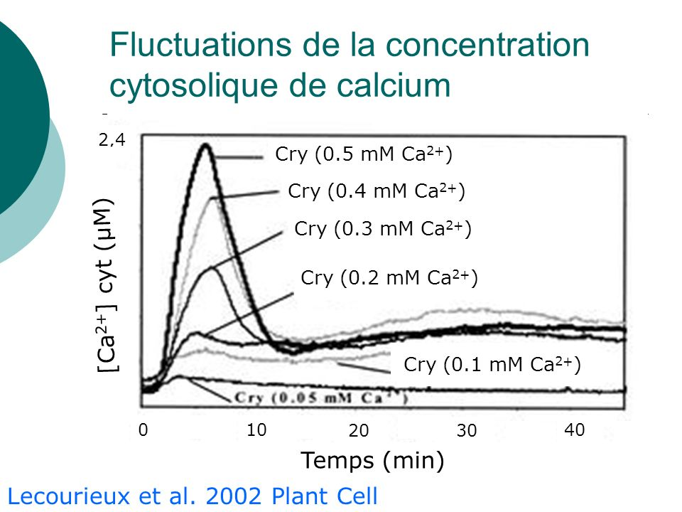 Fluctuations de la concentration cytosolique de calcium