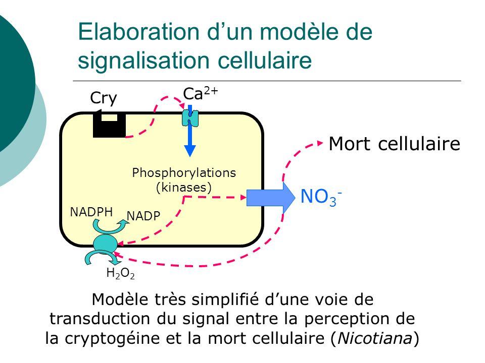 Elaboration d'un modèle de signalisation cellulaire