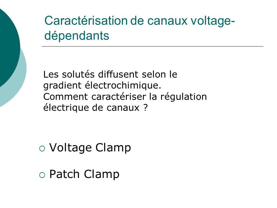 Caractérisation de canaux voltage- dépendants