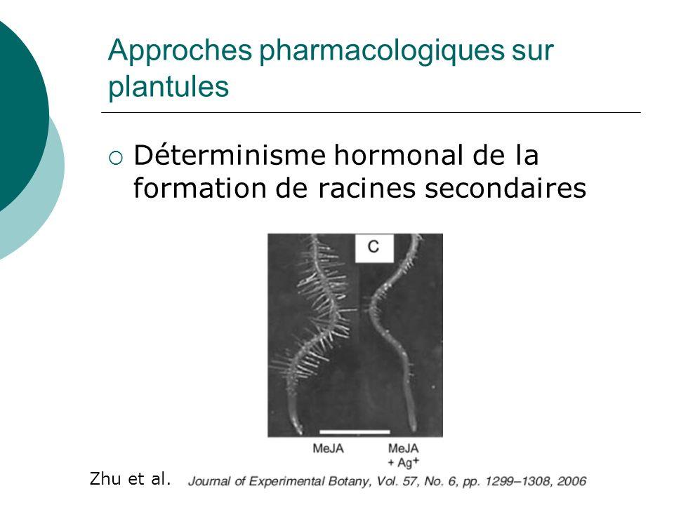 Approches pharmacologiques sur plantules