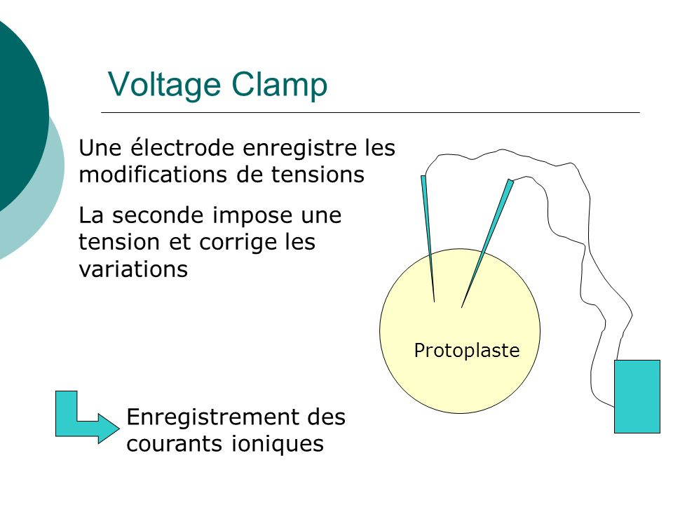 Voltage Clamp Une électrode enregistre les modifications de tensions