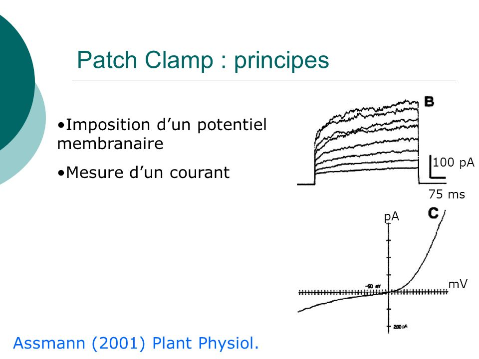 Patch Clamp : principes