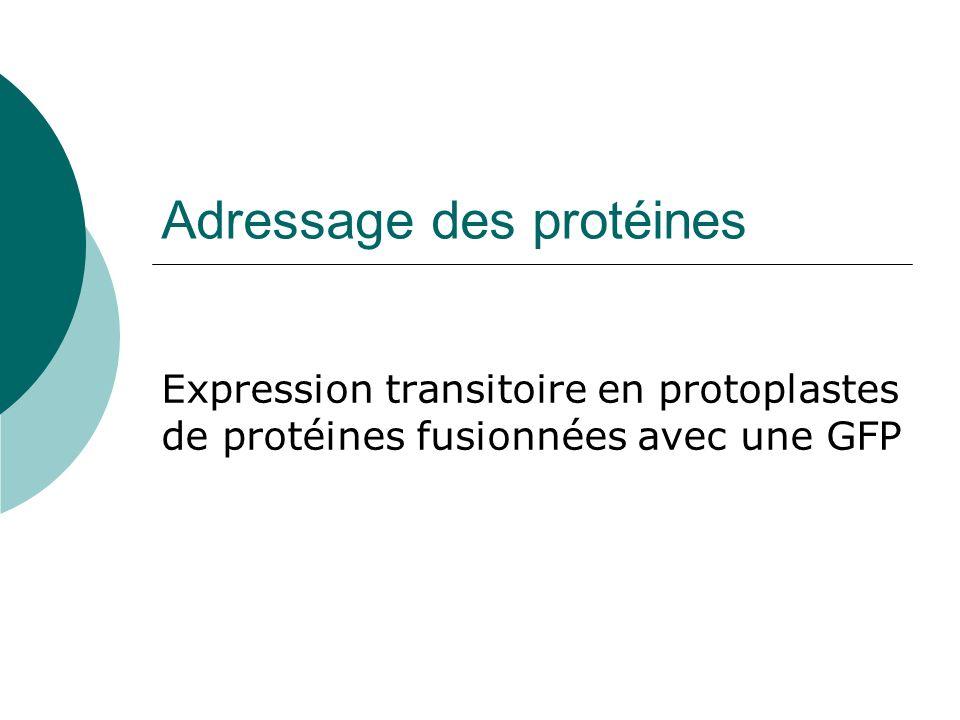 Adressage des protéines