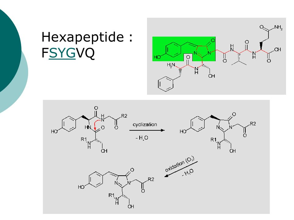 Hexapeptide : FSYGVQ
