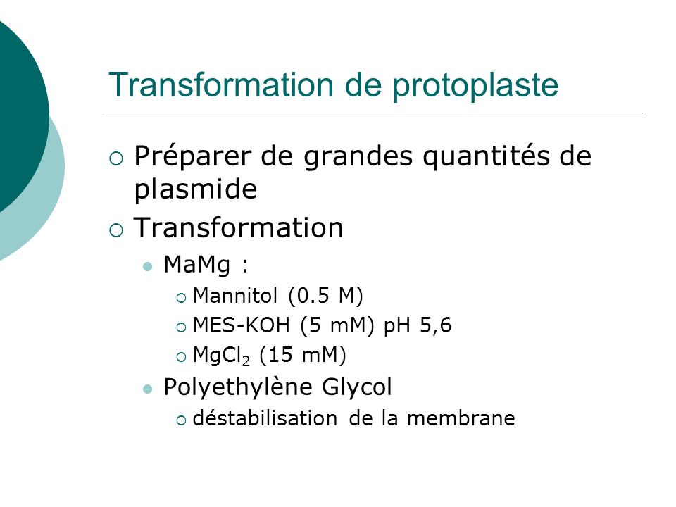 Transformation de protoplaste
