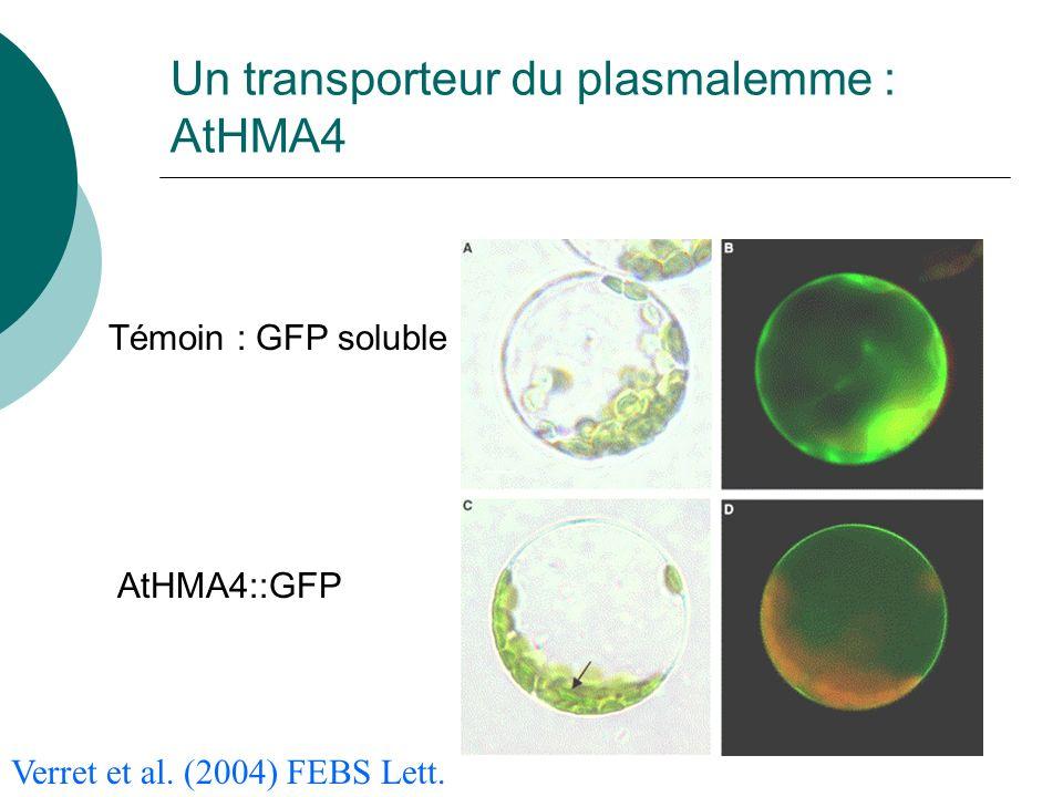 Un transporteur du plasmalemme : AtHMA4