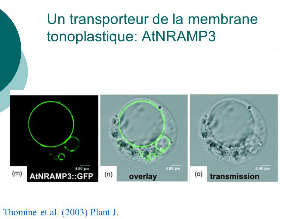 Un transporteur de la membrane tonoplastique: AtNRAMP3