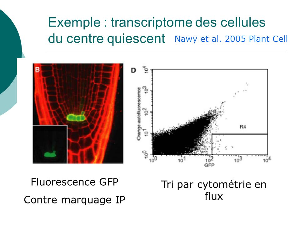 Exemple : transcriptome des cellules du centre quiescent