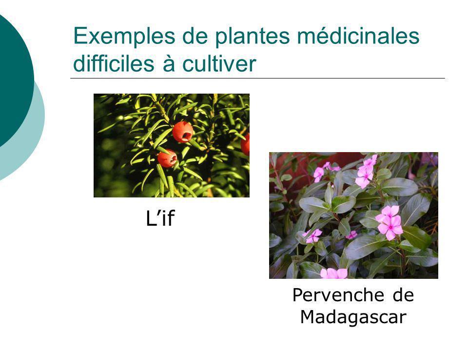 Exemples de plantes médicinales difficiles à cultiver