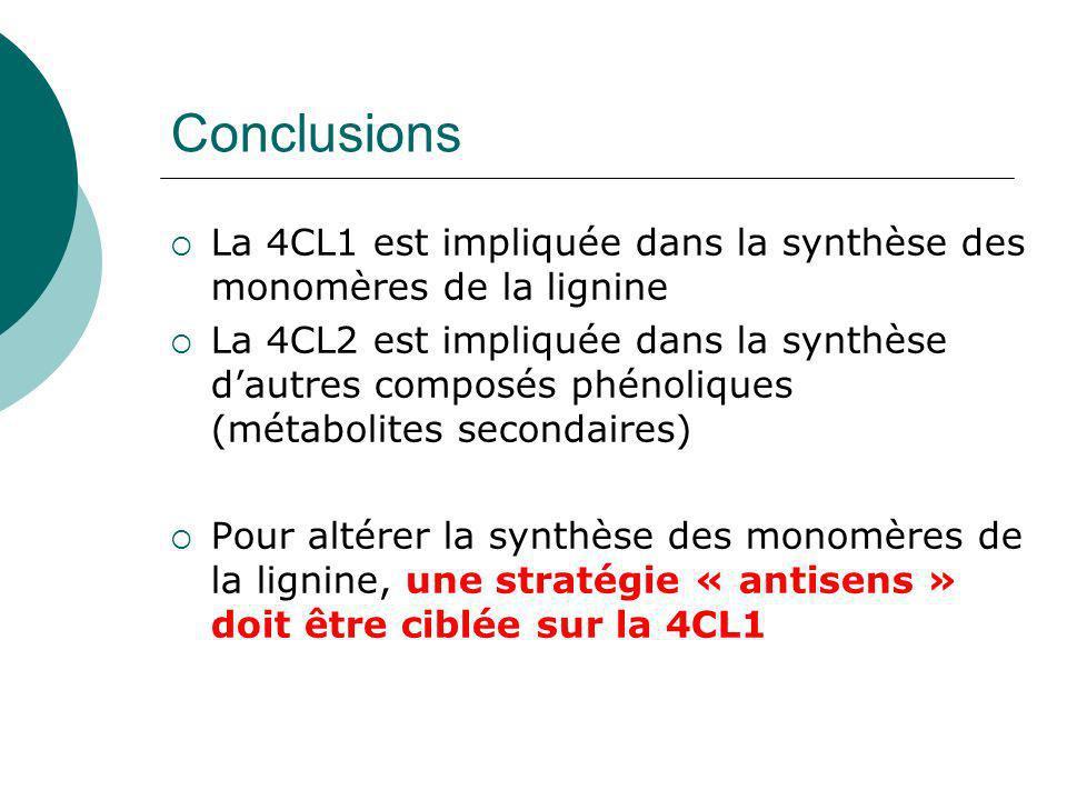 Conclusions La 4CL1 est impliquée dans la synthèse des monomères de la lignine.