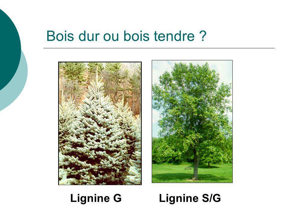 Bois dur ou bois tendre Lignine G Lignine S/G