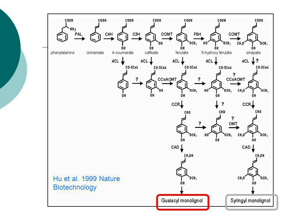 Hu et al. 1999 Nature Biotechnology