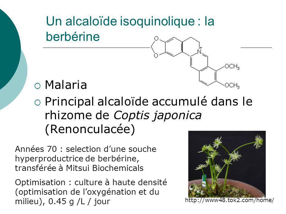 Un alcaloïde isoquinolique : la berbérine
