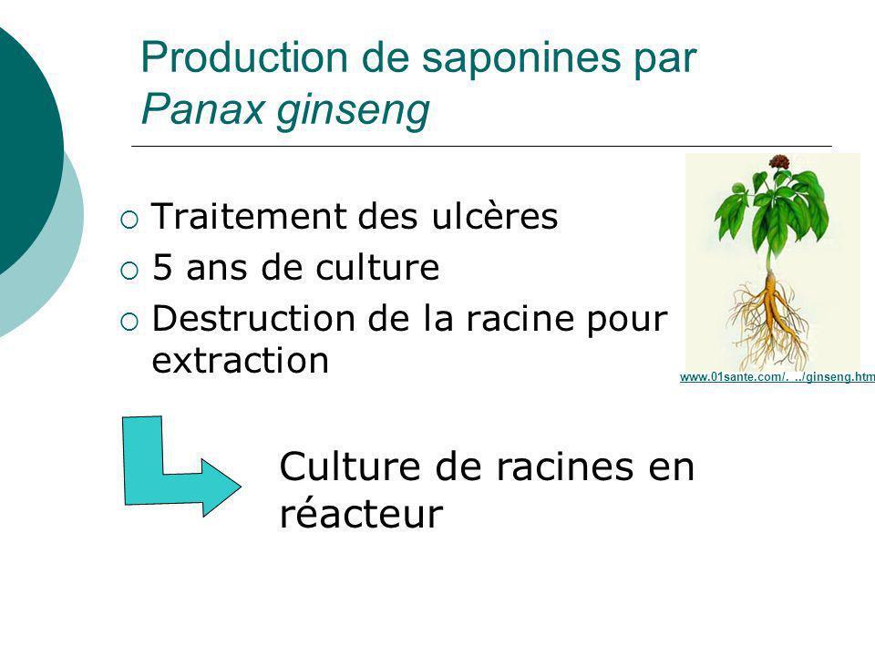 Production de saponines par Panax ginseng
