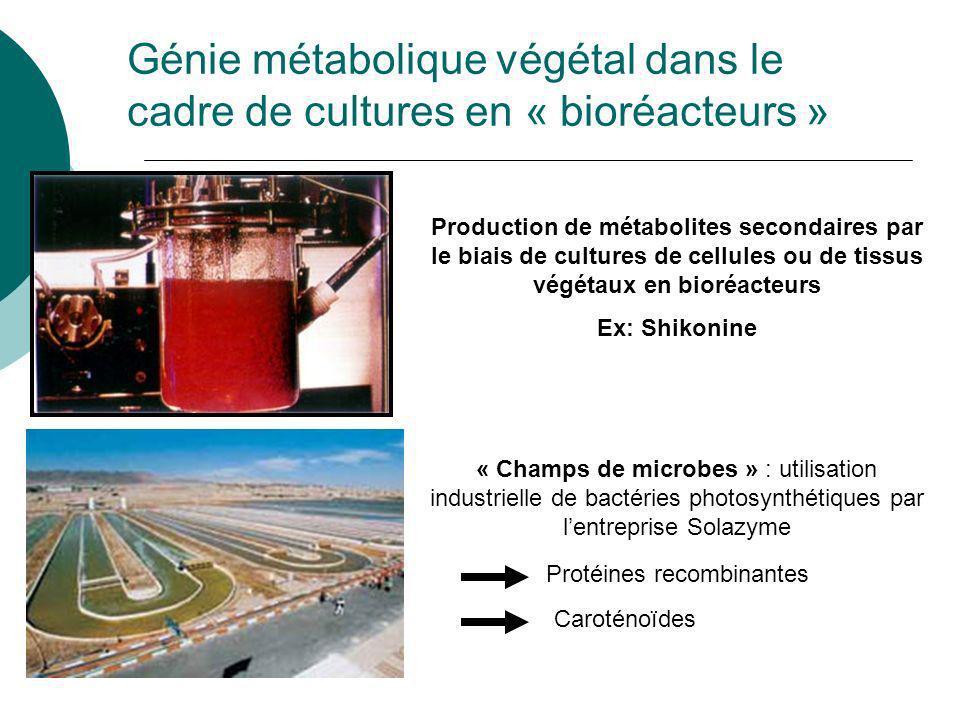 Génie métabolique végétal dans le cadre de cultures en « bioréacteurs »