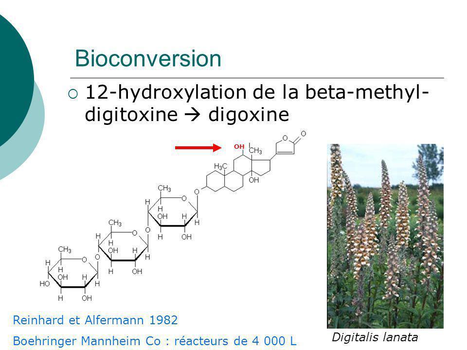 Bioconversion 12-hydroxylation de la beta-methyl-digitoxine  digoxine