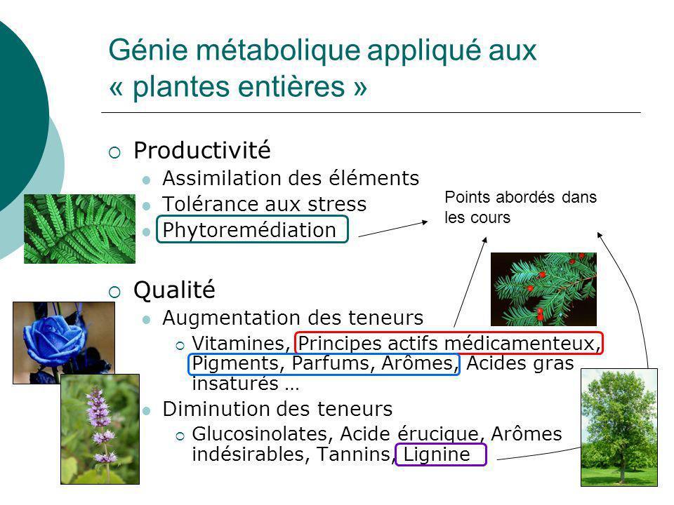 Génie métabolique appliqué aux « plantes entières »
