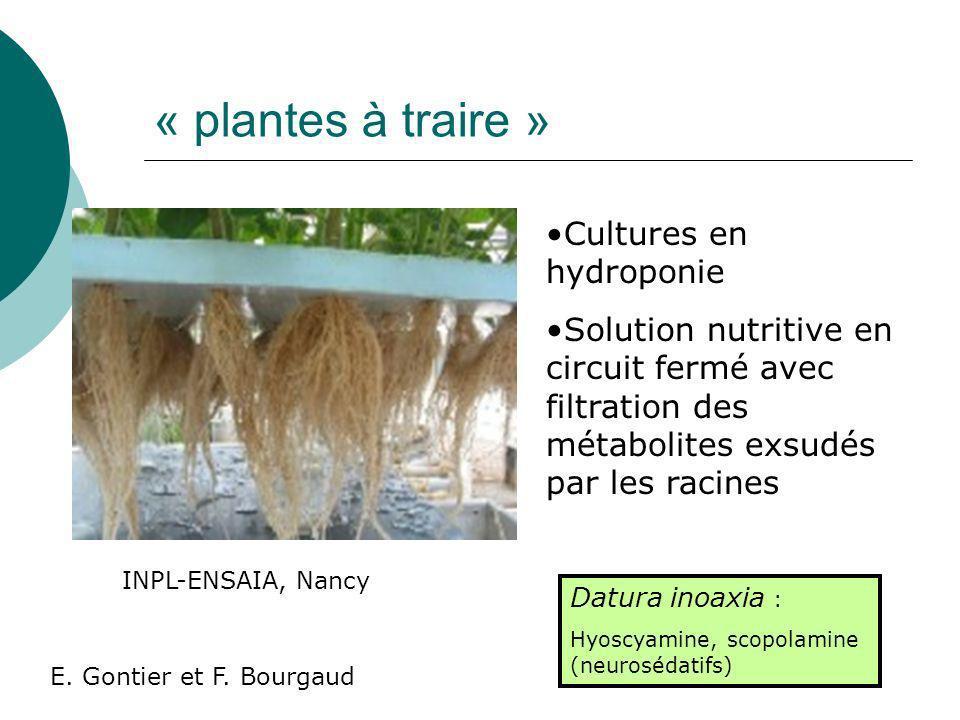 « plantes à traire » Cultures en hydroponie