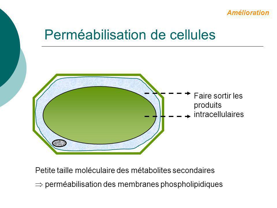 Perméabilisation de cellules